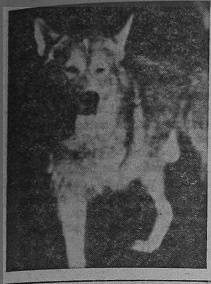 cornell_tripod_1959